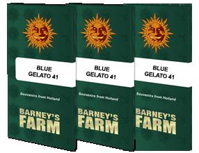BLUE GELATO 41™ | BARNEYS FARM® Semillas de Marihuana