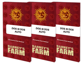 Semi da collezione 3 SEMI BARNEY/'S FARM AUTOFLOWERING DOS SI DOS