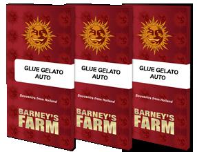 GLUE GELATO AUTO™ Autoflowering Cannabis Seeds | BARNEYS FARM®