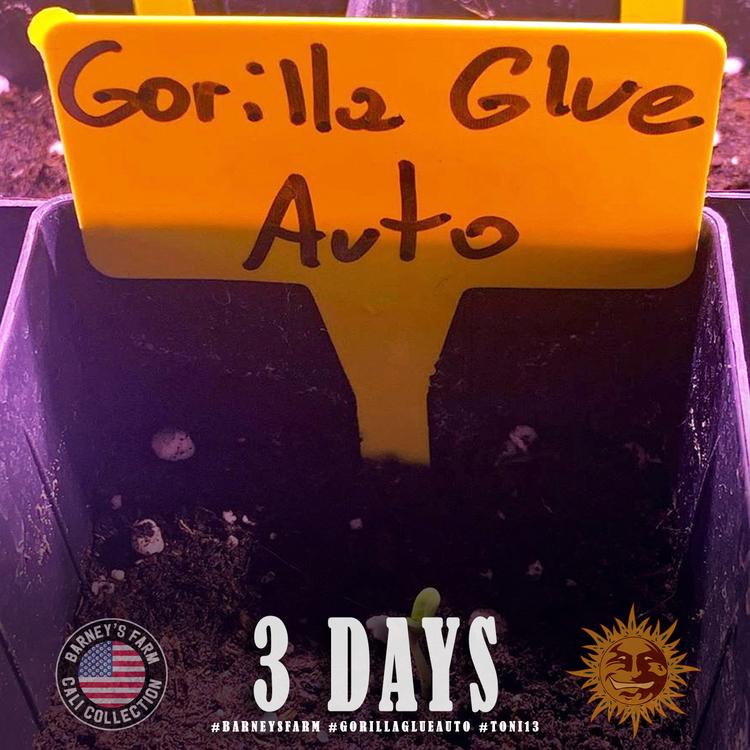 Gorilla Glue Auto 2